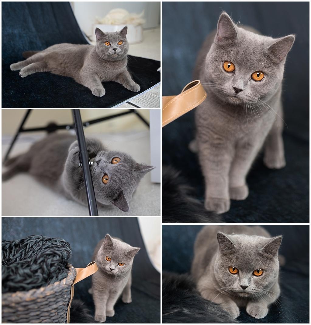 Madam Loulou, die Katzeninspektion